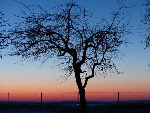 Free tree apple tree sunset romantic sky afterglow