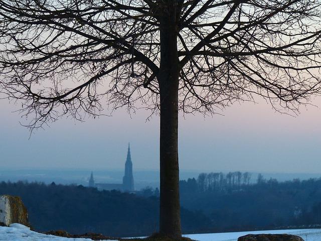 Free log landscape nature outlook ulm ulm cathedral