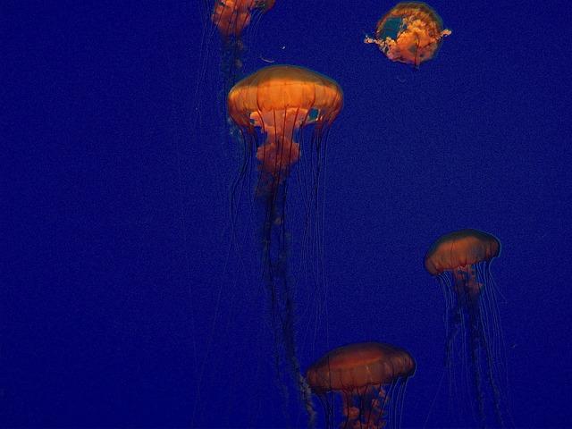 Free jellyfish blue aquarium