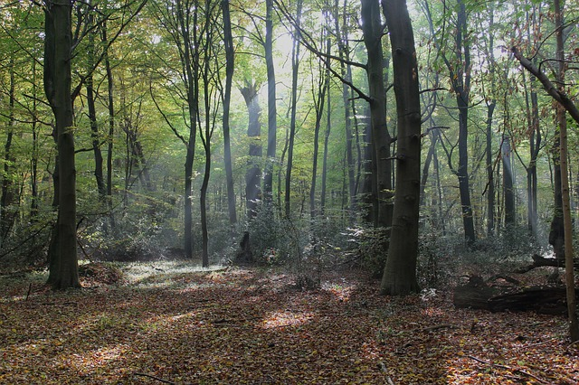Free germany forest trees woods rays crepuscular