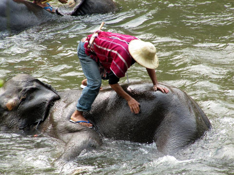 Free Photos: The man with the elephant in the water | Jurassic