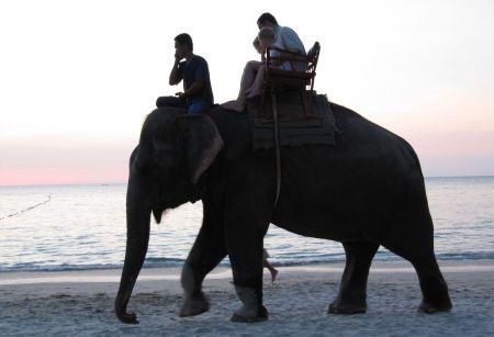 Free Thai Elephant trekking