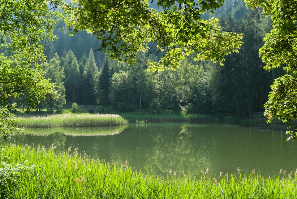 Free Beautiful landscape with forest lake