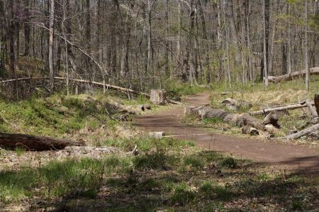 Free Forest cut down on spring time