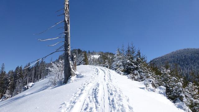 Free allgäu winter snow sun trees panorama
