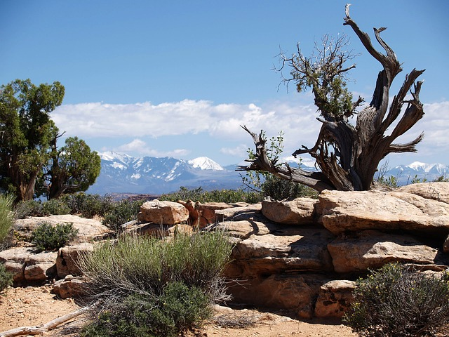 Free arches national park utah usa tourist attraction