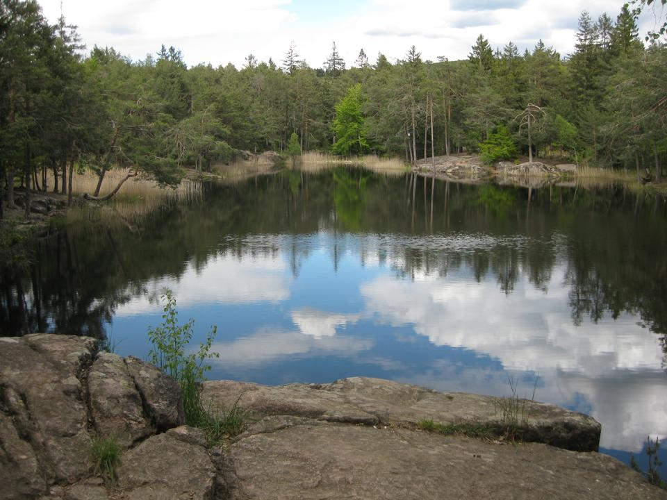 Free Pond surrounded by trees, which are mirrored on the surface