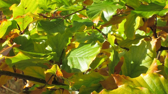 Free leaves light green light branches autumn