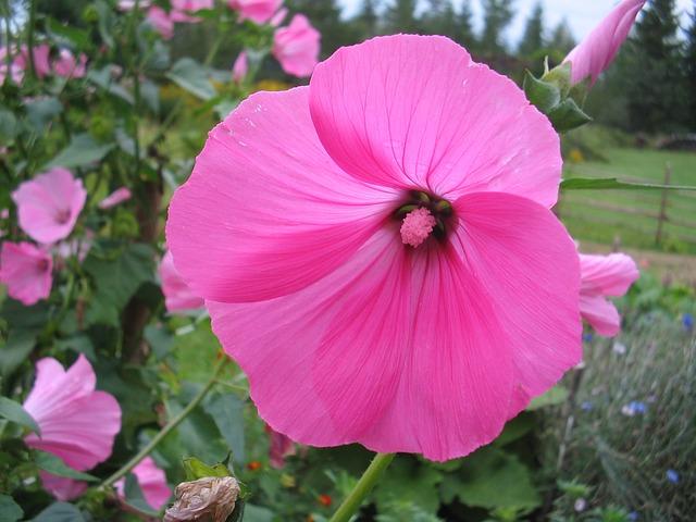Free summer flower pink green blade garden grass
