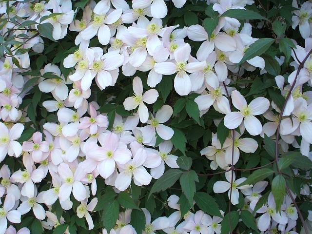 Free flowers blossom spring bloom flower