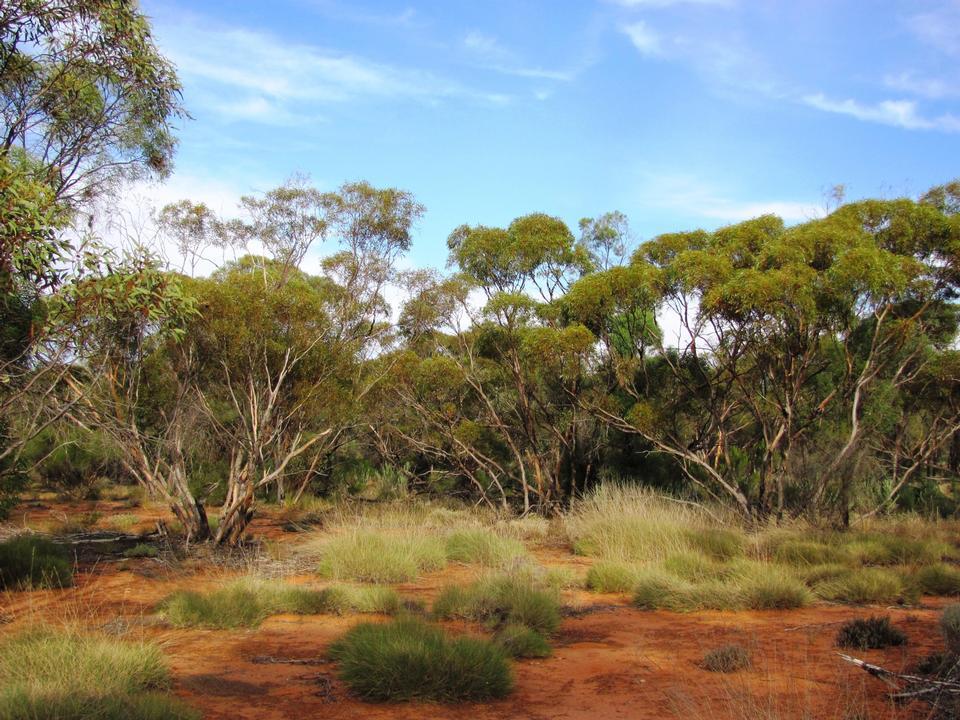 Free Gluepot Reserve in Australia