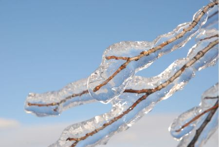 Free Branch frozen in ice after ice rain