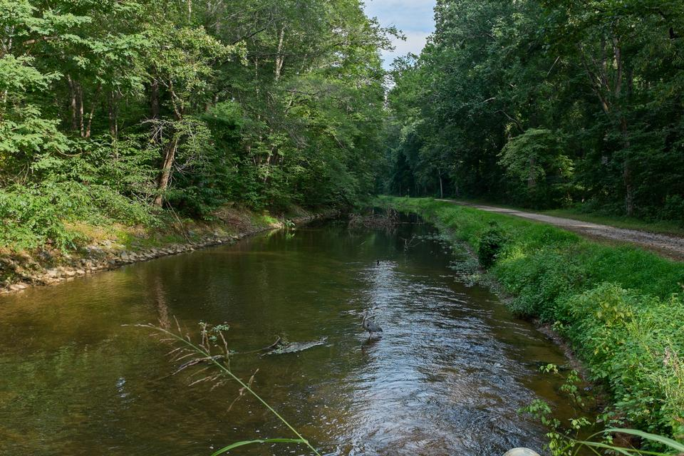 Free Small trout stream in forest