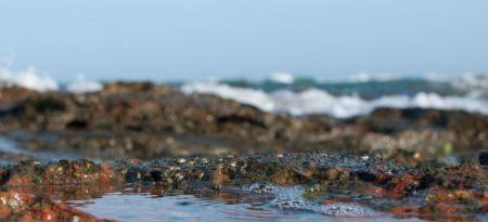 Free El Yaque Beach, Margarita island