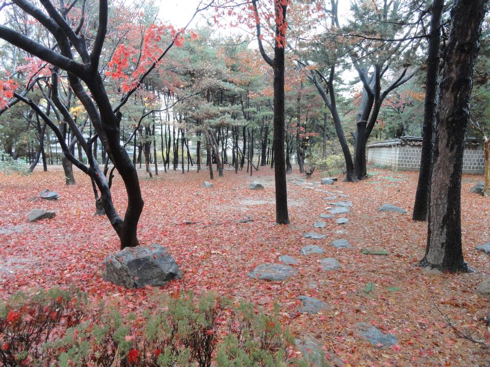 Free fallen leaves in Dosan Memorial Park