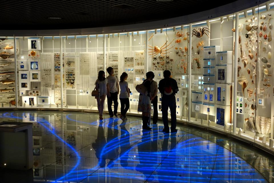 Free Exhibit in the National Museum of Nature and Science, Tokyo