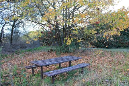 Free Derelict picnic table in autumn