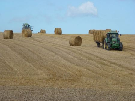 Free tractor and combine harvested wheat