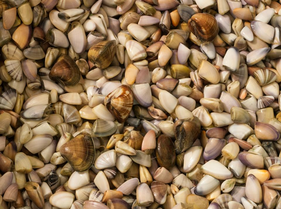 Free variety of sea shells from beach