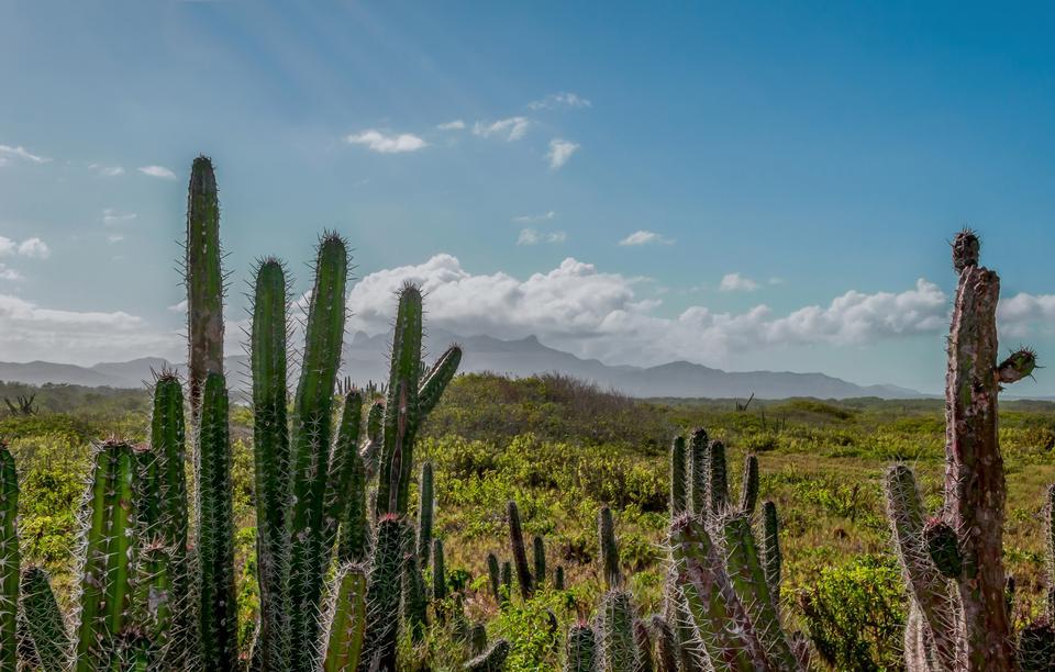 Free Margarita Island  in the Caribbean Sea
