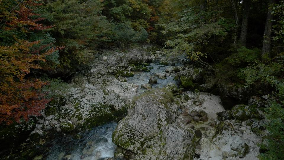 Free Lake Bohinj in Slovenia