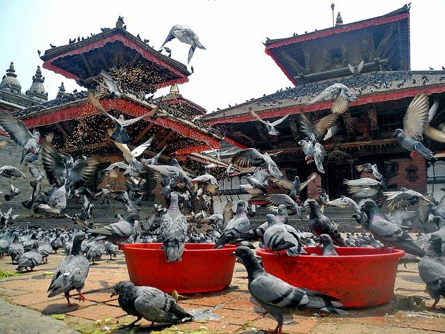 Free kathmandu nepal birds pigeons temple architecture