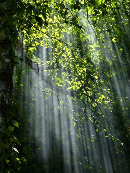 Free Sun beams pour through trees in foggy forest
