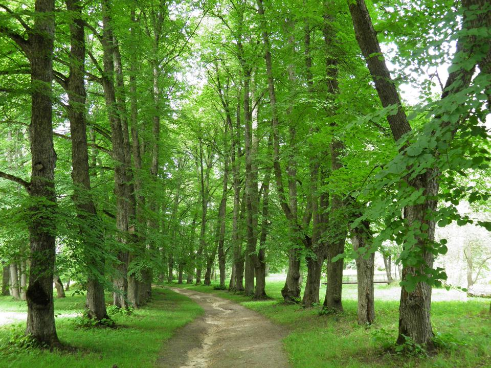 Free beautiful green forest