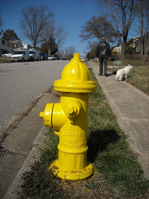 Free hydrant yellow street dog walk