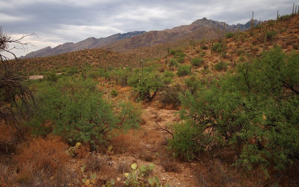 Free Sabino Canyon Trail in Tucson, Arizona
