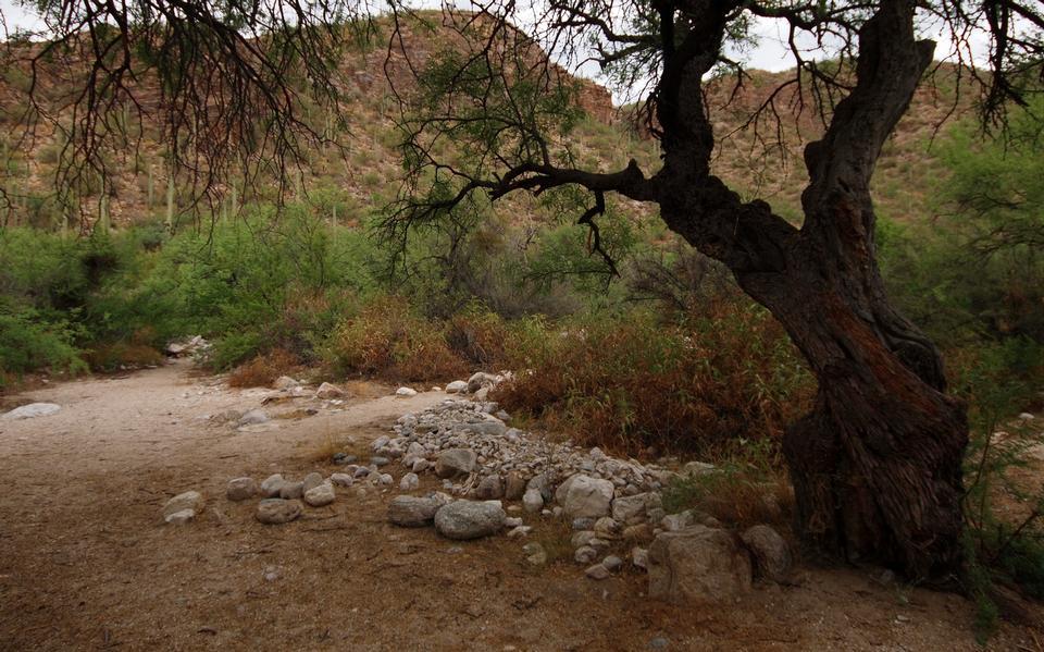 Free Sabino Canyon of the Santa Catalina Mountains