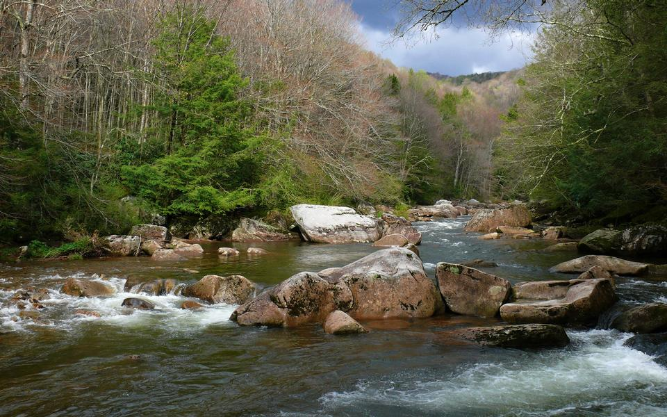 Free Williams River in the Monongahela National Forest