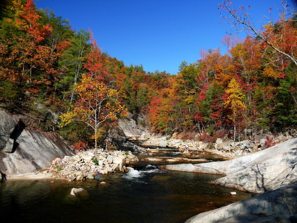 Free Foliage Wilson Creek