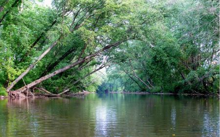 Free Johns River in Burke County, NC, USA