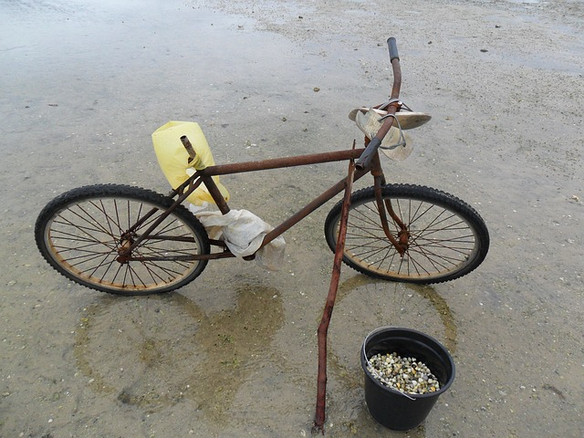 Free beach bike ocean sand seafood fishing water