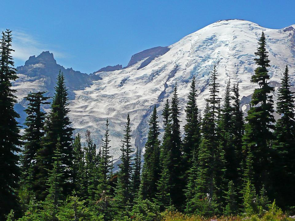 Free Mount Rainier National Park; Washington