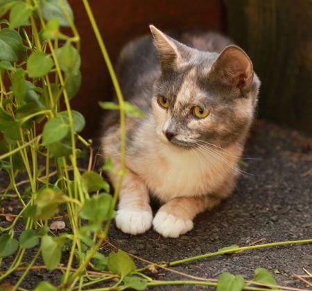 Free Beautiful cat sitting on the rock