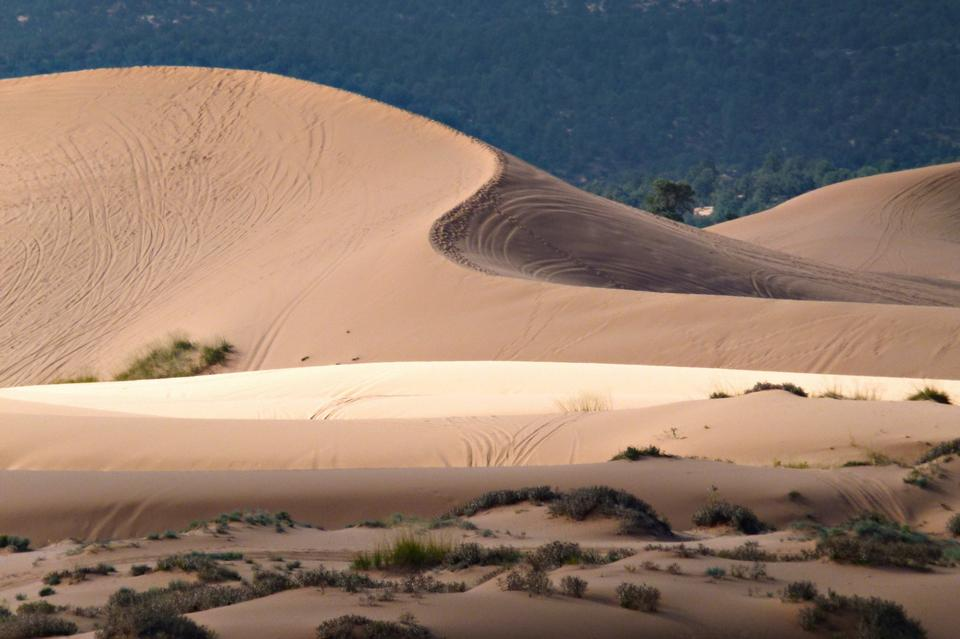 Free Photos: Coral Pink Sand Dunes State Park | ustrekking