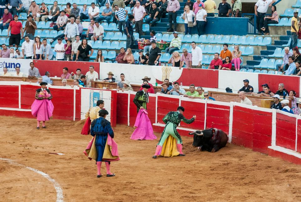 Free Traditional corrida - bullfighting in spain