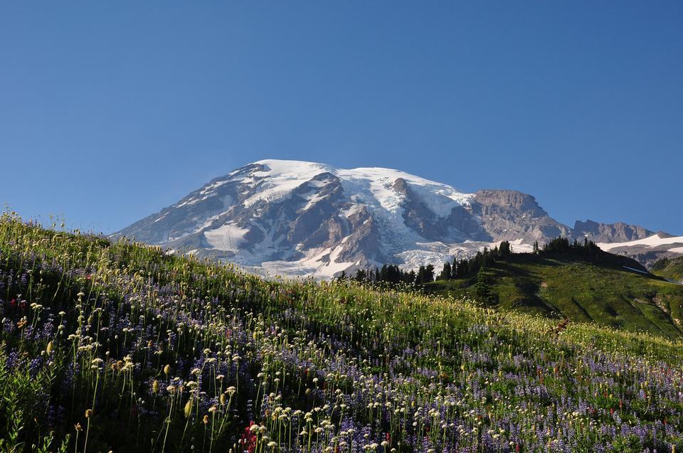Free Mt Rainier National Park Wildflowers Summer Time Cascade Mountain