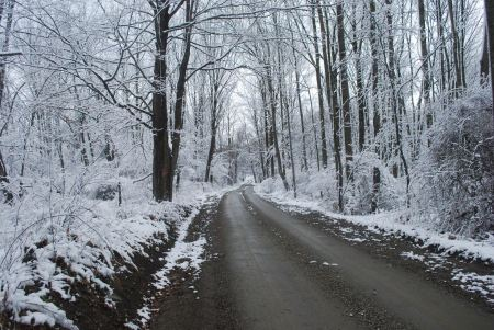 Free Rhode Islandwinter landscape. Winter road and trees covered with