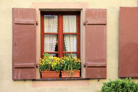 Free pot plants on a window sill