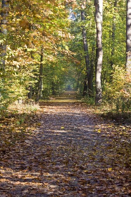 Free hiking way high upward emerge leaves maple book