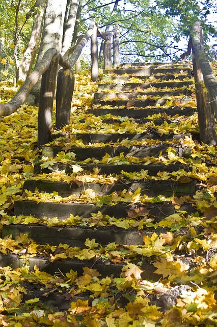 Free stairs way high upward emerge leaves maple book