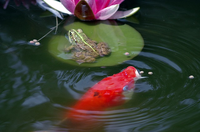 Free pond frog pond frogs amphibian green water