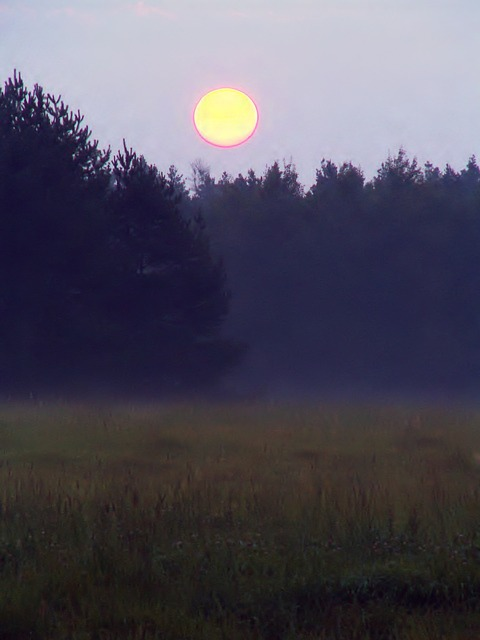 Free dawn glade forest the rising sun fog nature
