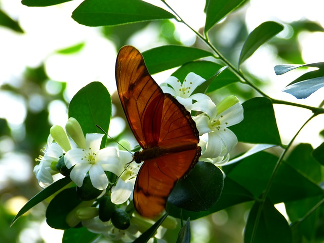 Free julia butterfly butterfly fly wing animal insect