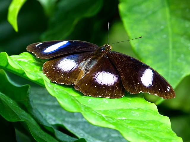 Free butterfly fly insect animal names great eggfly