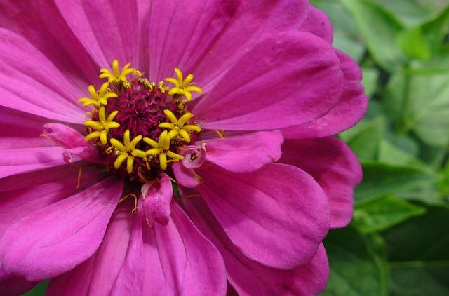 Free flower nature plant spring wild flower