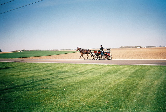 Free horse countryside carriage transportation